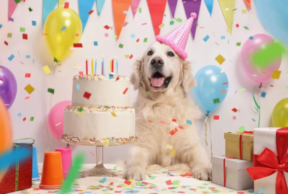 fiesta cumpleaños perro