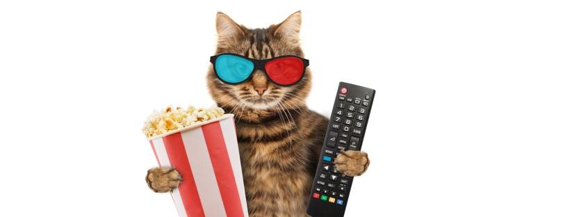 Mejores peliculas de animales con gatos