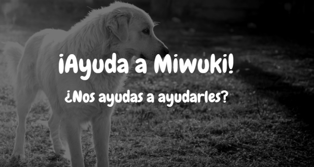 Miwuki Adoptar Mascotas