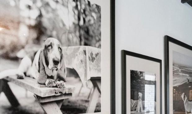 Museo de perros MOD
