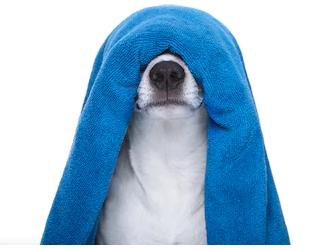 spas para perros