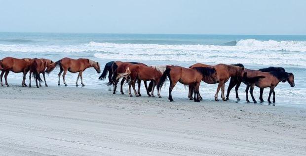 caballos en playa - mascotaamiga