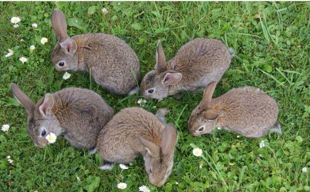 Conejos - Mascotaamiga