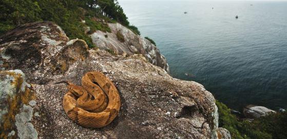 Serpiente de Isla quemada - Mascotaamiga