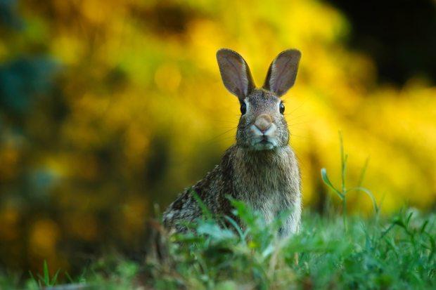 significado de animales - significado de conejo