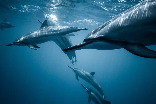 significado de animales - significado del delfin