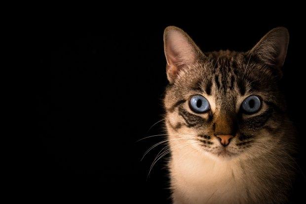 significado de animales - significado del gato