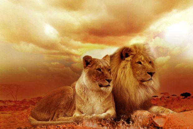 significado de animales - significado del león