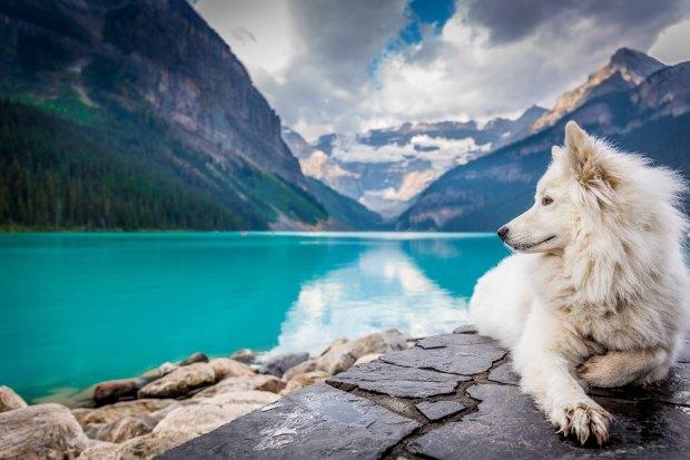 significado de animales -significado del perro