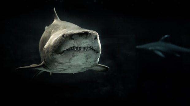 significado de animales - significado del tiburon
