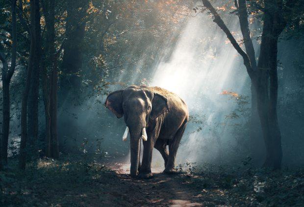 significado de los animales - significado del elefante
