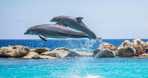 delfines son mamiferos