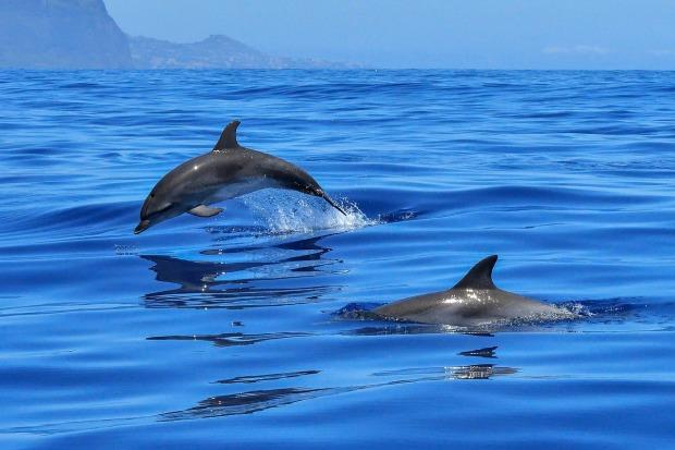 el delfin es mamifero