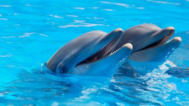 los delfines son mamiferos